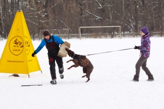 Our dogs on training with Dmitry Melnikov